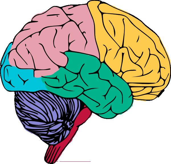 Colorful brain art