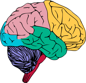 colorful brain clipart